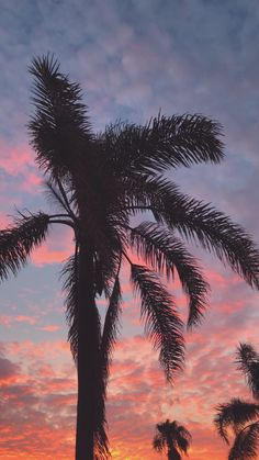 Palm Trees Silhouette With Little Breeze At Sunset. Vertical Video Of Palm Tree. - palm sunset america authentic background beautiful breeze bright cinematography color colorful c - Sunset Wallpaper, Tree Wallpaper, Nature Wallpaper, Paradise Wallpaper, Background For Photography, Nature Photography, Beste Gif, Palm Tree Sunset, Palm Trees Beach