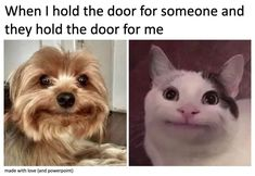 Funny Animal Photos, Funny Animal Memes, Funny Puns, Funny Animal Videos, Animal Quotes, Funny Images, Funny Animals, Funny Stuff, Bf Memes