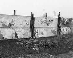 18-Sprouts,-Dunston-allotment,-Gateshead,-Tyneside,-1977-Chris-Killip-Martin-Parr