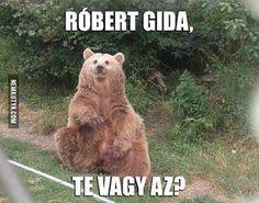 vicces Medve képek - Google keresés