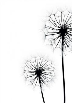 Poster with two dandelions in black and white. The poster is available in large and small larger . Poster with two dandelions in black and white. The poster is available in large and small sizes. Cool Art Drawings, Pencil Art Drawings, Easy Drawings, Art Sketches, Black And White Posters, Nursery Wall Art, Doodle Art, Wall Art Prints, Watercolor Art