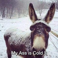 This is very true for Minnesota winters