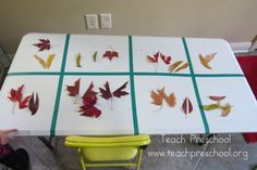 Organizing/graphing leaves and making leaf confetti--project for after nature walk, before rake art project