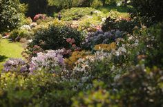 Blarney Castle in Summer – Tea and a camera Castle Gardens, Summer Sun, Scotland, Ireland, Shades, Sky, Adventure, Winter, Flowers