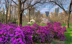 Take a walk through Central Park in the spring :-)