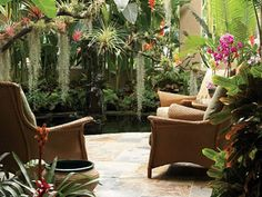 Hawaiian lanai, koi pond, plants: Alocasia, Anthurium, bromeliads, Colocasia, crotons, ferns, ginger lilies, heliconias, Heliconia rostrata,  huge red-and-yellow bracts, orchids, ti plants, a papaya, & plumeria, fishtail palm, traveler's palm, & variegated Hawaiian banana