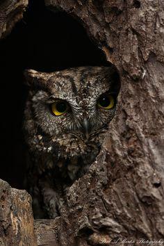 owl in knot hole camo