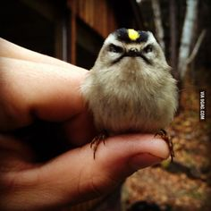 The Angriest Bird