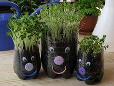 Fogj egy pár üres vizes vagy üdítős palackot, vágd le a tetejüket és néhány perc alatt konyhakertet varázsolhatsz az íróasztalodon. A hobbikert.hu megmutatja, hogyan termelhetsz... Kid Experiments, Easy Craft Projects, Baby Games, Diy And Crafts, Life Hacks, Planter Pots, Lily, Spring, Flowers