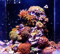 karlo Congratulations to Karlo for being selected for our March Reef Profile! His 4 gallon pico reef is a beautiful custom built coral garden. Below he has written a profile of his aquariums progress over the past year, and shares his exp...