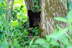 Being Sneaky Photo by Kellie Walls Sharpe — National Geographic Your Shot