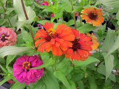 Flower at SGHS