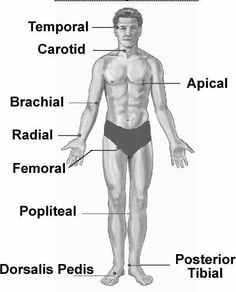 Central + peripheral pulses.