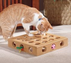 One common reason why cats can misbehave is due to boredom. Puzzle feeders can tap into a cat's natural desire to hunt as well as provide them outlets for their curious and playful nature - here's our top 5 picks. http://www.styletails.com/2016/10/14/the-5-best-interactive-cat-food-puzzle-games/