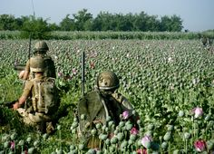 US troops guard the Afghani poppy fields. After all, the CIA and military black budget need untraceable narco-funds for their schemes.