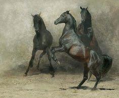 Amazing pictures of horses taken by Wojtek Kwiatkowski - justpaste.it