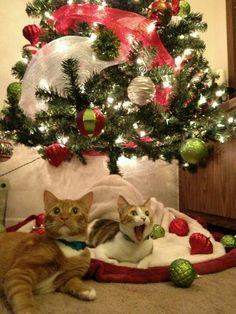 Hahaha he saw santa!