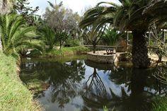 Quinta das Palmeiras, Porto Santo Island: See 217 reviews, articles, and 196 photos of Quinta das Palmeiras, ranked No.5 on TripAdvisor among 25 attractions in Porto Santo Island.