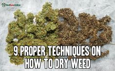 9 Proper Techniques on How to Dry Weed From RedEyesOnline.net