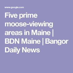 Five Prime Moose Viewing Areas In Maine | BDN Maine | Bangor Daily News