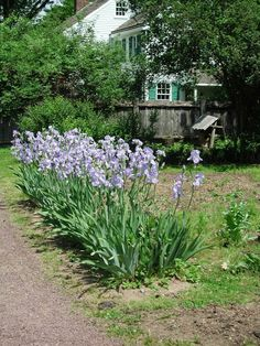 """""""Gardeners will be here on Sunday from pm to talk about the gardens at Pennsbury Manor. Bucks County, Gardens, Plants, Garden, Flora, Plant, Garden Types, Tuin, House Gardens"""