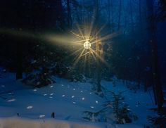 glowing disco ball in the forest!