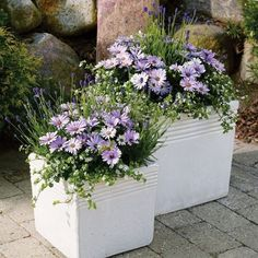 How to beautify our homes with perfect creations in pots beautify creations homes perfect Pots is part of Garden containers - Container Flowers, Flower Planters, Container Plants, Garden Planters, Container Gardening, Flower Pots, Flower Ideas, Patio Plants, Potted Plants