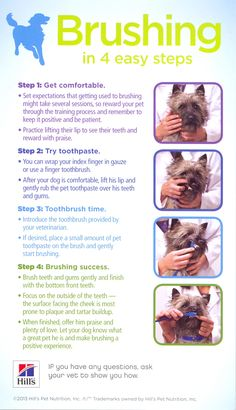 How to brush your dog's teeth. If you want more information or want to schedule…