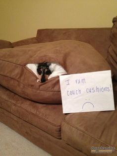 Good news, I made myself a bed…… bad news, it's inside the couch. Oh, Simon! So cozy, and so shamed.View Post