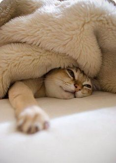 Do I have to get up ? Convinced I'm a cat, this is me Monday-Friday!!!!