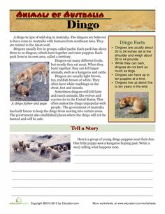 First Grade Science Worksheets: Animals of Australia: Dingo Australia Animals, Australia Day, Australia Living, Animal Worksheets, Science Worksheets, Library Page, First Grade Science, Wild Dogs, Learning Resources
