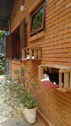 Casa das gatinhas.