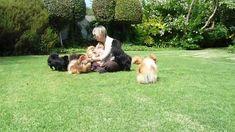 Happy Poms 2 - Anjula Pomeranians
