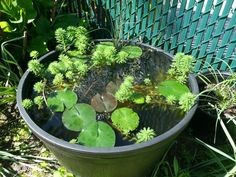 Have any suggestions for containers suitable for container ponds? If so, can you give some pros and cons of each type? Garden Pond, Water Garden, Container Pond, Mini Pond, Ponds, Terrarium, Gardening, Canning, Terrariums