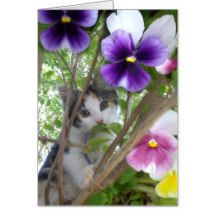 Cute_Kitten_And_Pansies, Greeting Card