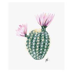 prints-illustrations-posters-cacti-decor-babasouk