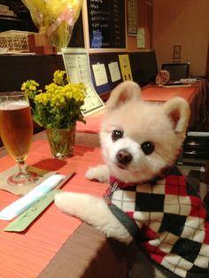 #wanko とりあえずビールを。