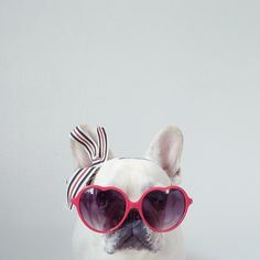 """""""...Pull the Car around"""".... """"Mama's ready to ride"""", French Bulldog In Pink Shades"""