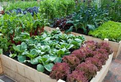 Organic, gorgeous raised beds