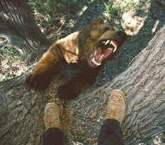 Oh goodness, I'm getting attacked by a bear. I think I'll take a picture.
