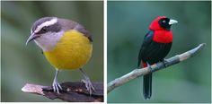 Birding Tours in Costa Rica