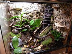leopard gecko vivarium ideas - I wouldn't do this for a leopard gecko..but it is cool