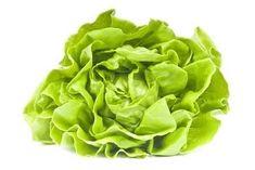 Lattuga proprietà e benefici di una pianta molto diffusa in tutto il mondo utilizzata per la preparazione di insalate.