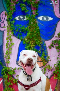 A little paint, a little plant and a not-so-little deaf dog!
