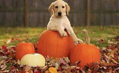 K9 Instinct's tips for having a dog friendly, safe Halloween with your furry family! Happy Halloween from K9 Instinct!