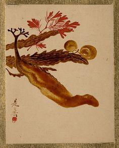 Seaweed  Shibata Zeshin  (Japanese, 1807–1891)  Period: Edo period (1615–1868) Culture: Japan Medium: Album leaf; lacquer on paper
