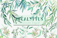 Eucalyptus. Watercolor clipart. by LABFcreations on Creative Market