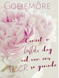 Goeie More, Afrikaans, Rose, Cards, Inspiration, Google Search, Pink, Biblical Inspiration, Roses