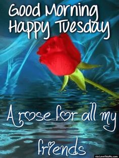 tuesday good morning friends | Good Morning Happy Tuesday A Rose For All Of My Friends Pictures ...