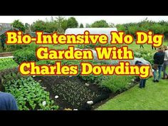 Homeacres no dig garden fifth summer: veg, fruit, flowers, intense cropping and easy weeding. - YouTube
